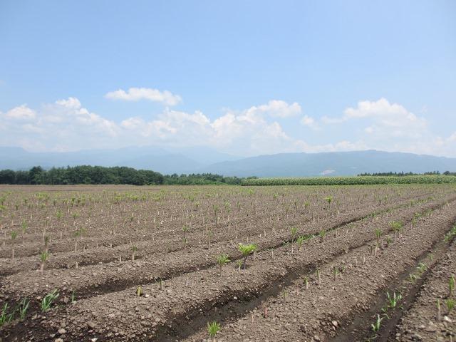 野菜が主役の時代 Tokan Monthly Report 2014.6月号から
