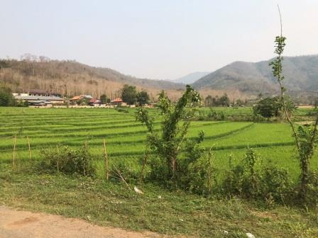 lao_field_mountain_field.jpg