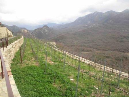 montenegro_winery_luporc.jpg