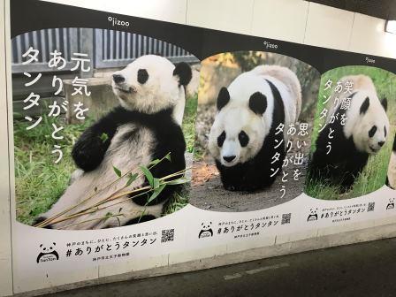 kobe panda.jpg